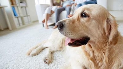 Aurora IL Pet Stain and Odor Removal