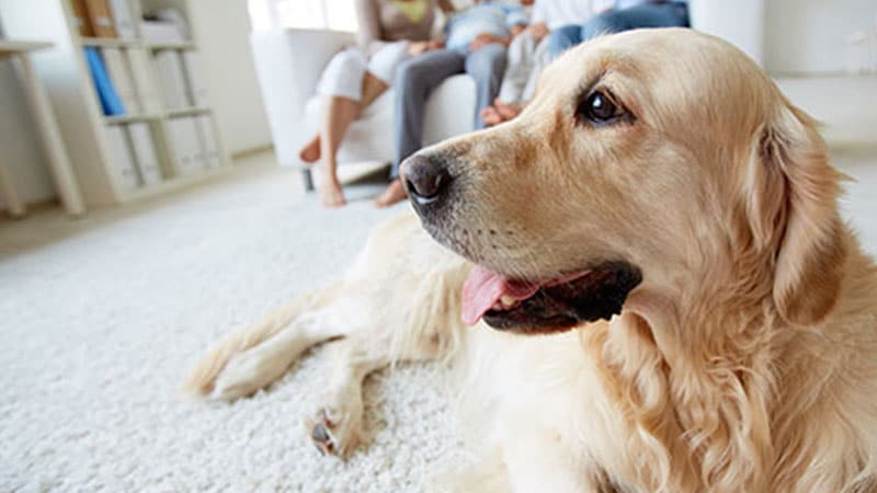 Pet Stain and Odor Removal Aurora Illinois